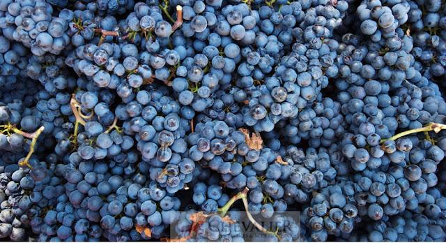 WSJ: Trừng phạt tạo cú huých bất ngờ cho ngành rượu vang Nga
