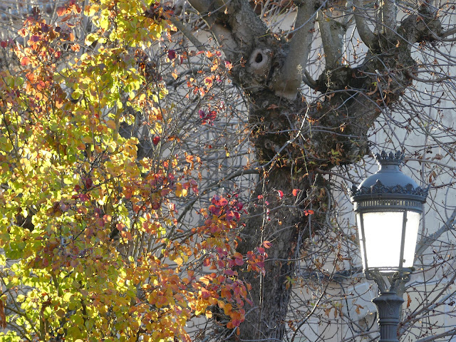 Farola junto a árbol con hojas amarillas