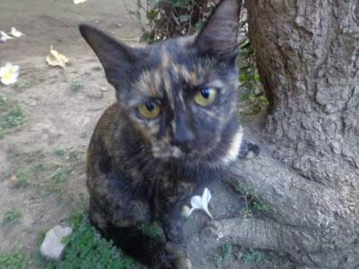 Manfaat / Fungsi Kumis Pada Kucing dan Akibat Memotong Kumis Kucing