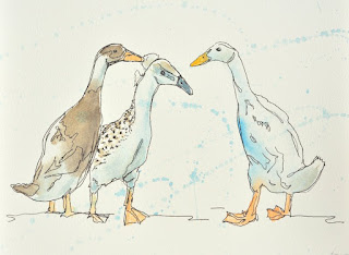 Ink and watercolour Indian runner ducks