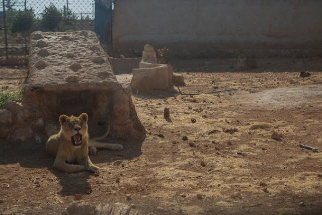 الحيوانات المهجورة والجوع، وعملية إجلائهم من حلب