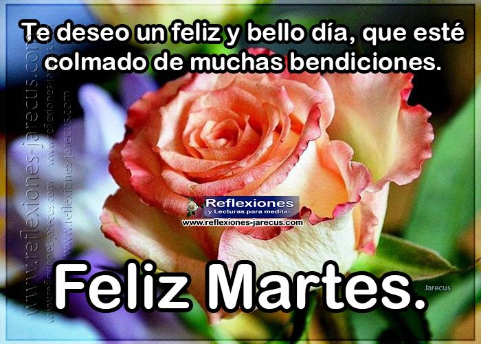 Feliz martes, te deseo un feliz y bello día, que esté colmado de muchas bendiciones