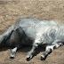 भूत ने लिया बकरी का रूप-Bhoot ne liya bakri ka roop-Real Ghost Experience Story