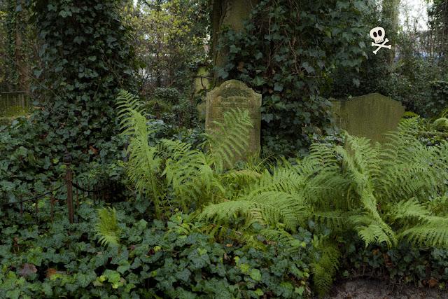 Los helechos de Huis te Vraag lucen su verde brillante sobre el oscuro follaje y la piedra gris.