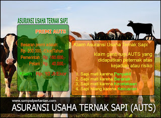 Asuransi Usaha Ternak Sapi (AUTS) memberikan klaim ganti rugi 10jt/ekor