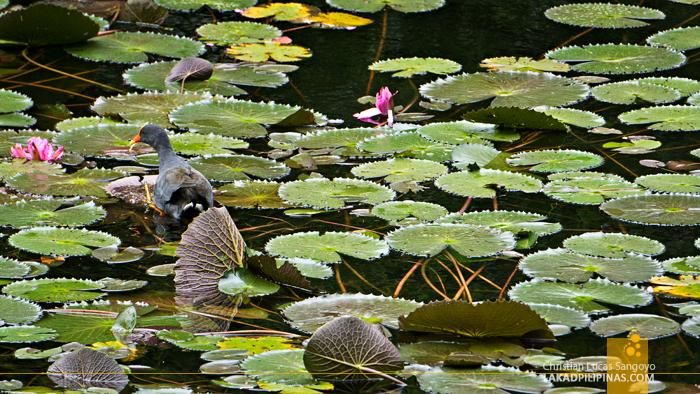 Brisbane Day Tour City Botanic Garden