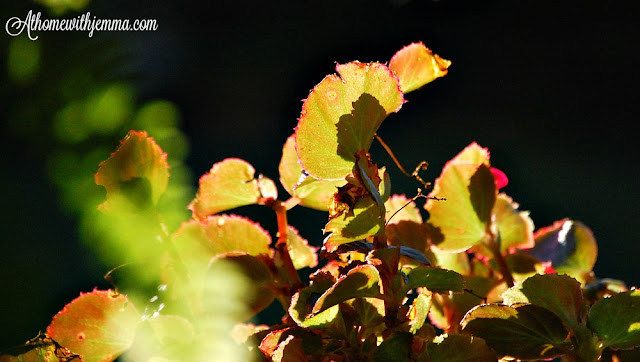 celebrating-Fall-changing-leaves-color-athomewithjemma