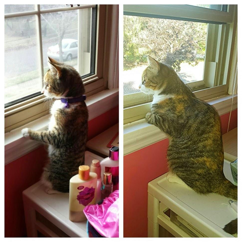 cat-pictures-2