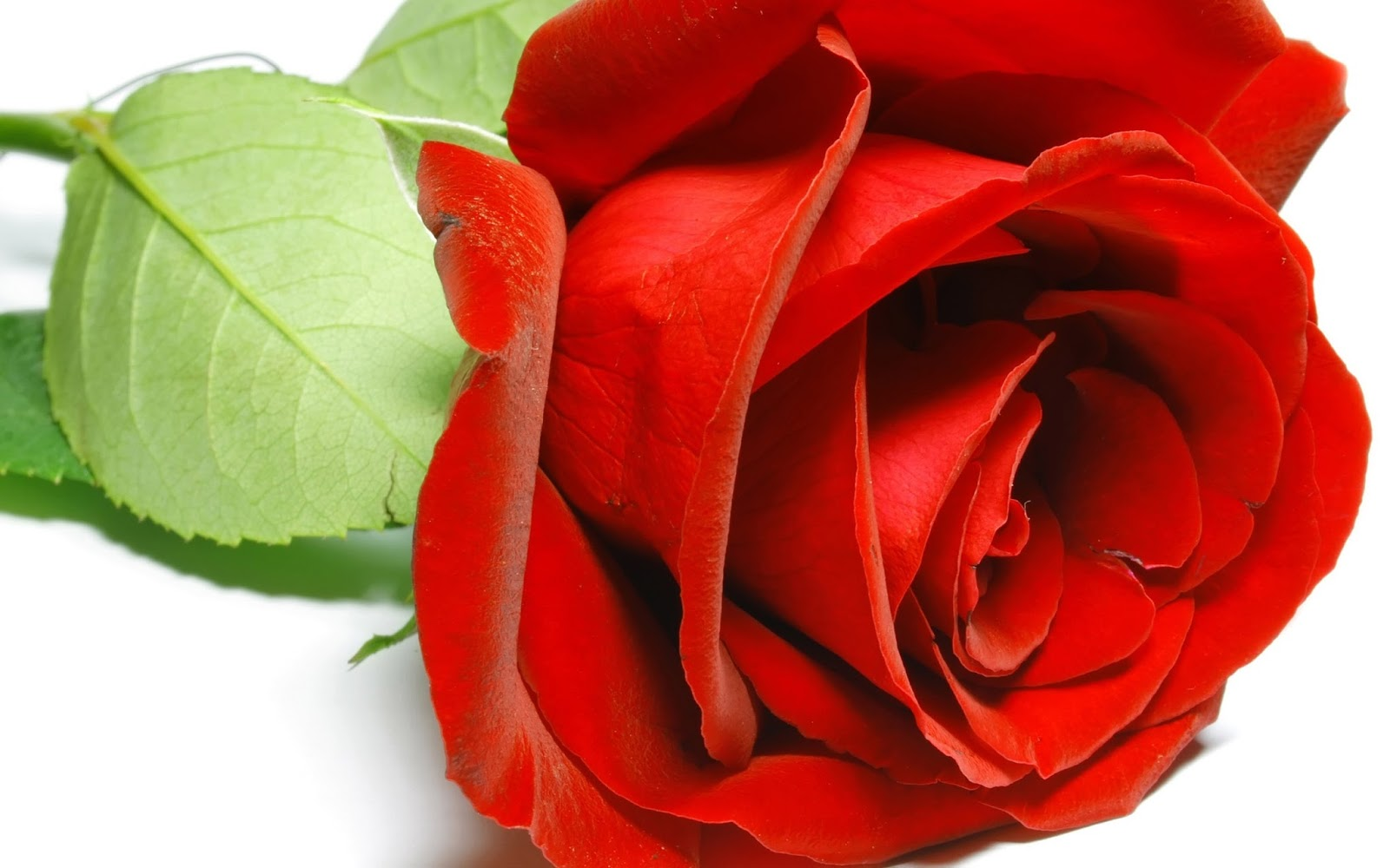 86 Wallpapers Flower Rose Love Wallpaper Cave Best Images Of Love