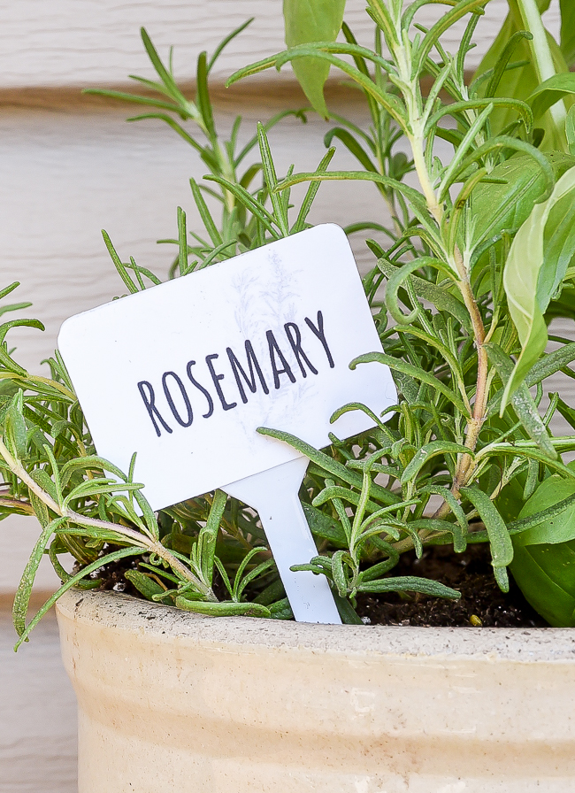 Dollar Tree Rosemary herb marker