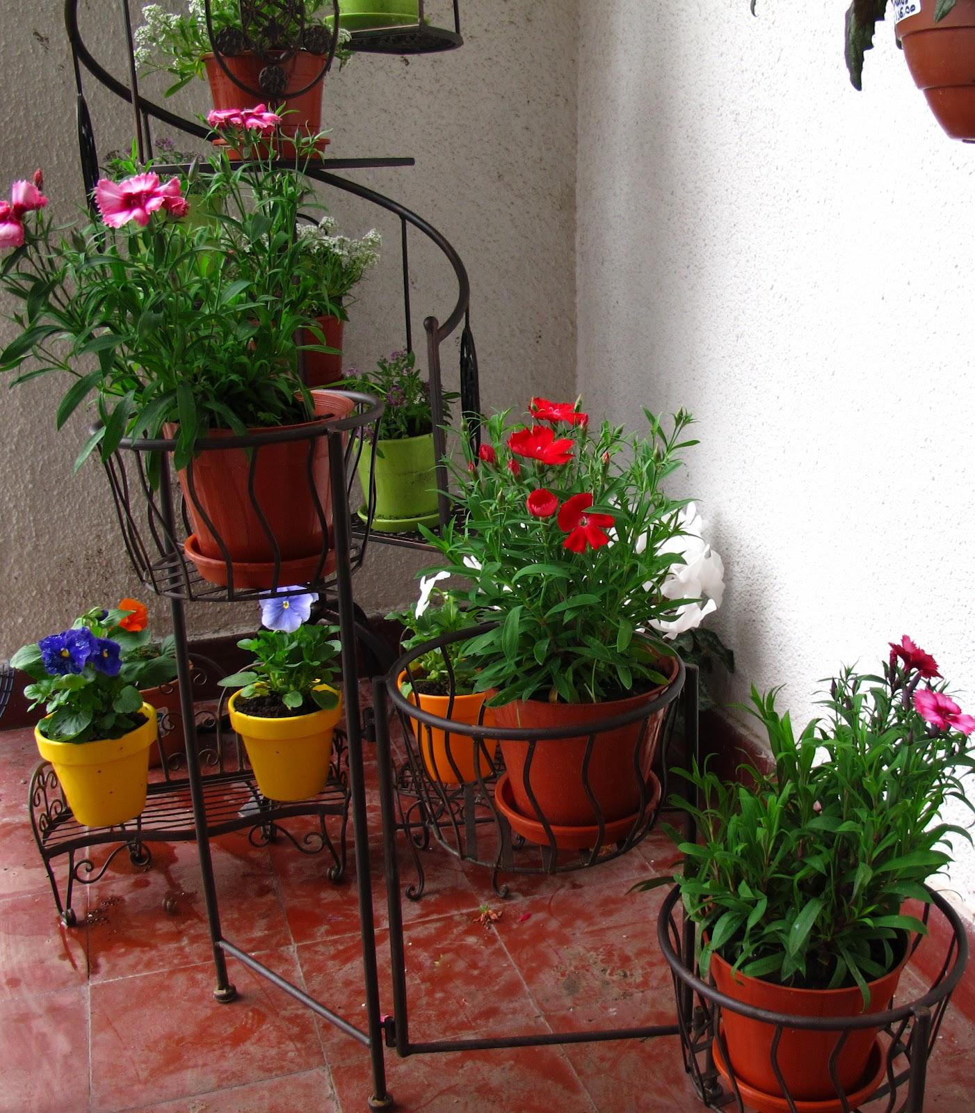 En tu casa tienda deco c for Fotos de plantas en macetas
