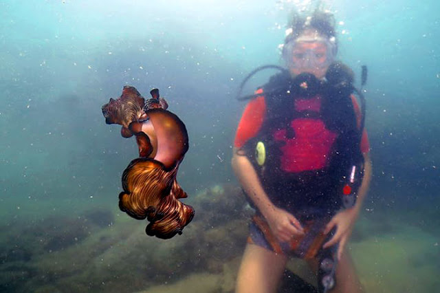 Kuching Diving Photo