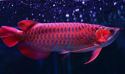 Tips Memulai Bisnis Ikan Hias dan Jenis-Jenisnya