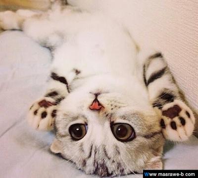 صور صور قطط كيوت 2020 خلفيات قطط جميلة جدا cats10.png