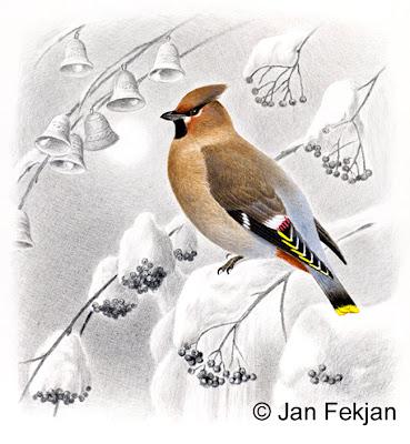 Bilde av digigrafiet 'Sidensvans'. Digitalt trykk laget på bakgrunn av et maleri av en fugl i vinterlandskap. En illustrasjon av sidensvans, Bombycilla garrulus. Fuglen sitter på en snøtung rogn. Snøen ligger tungt på trærne. I bakgrunnen ser man noen bjeller eller klokker. Stilen kan beskrives som figurativ og realistisk. Bildet er tilnærmet kvadratisk.