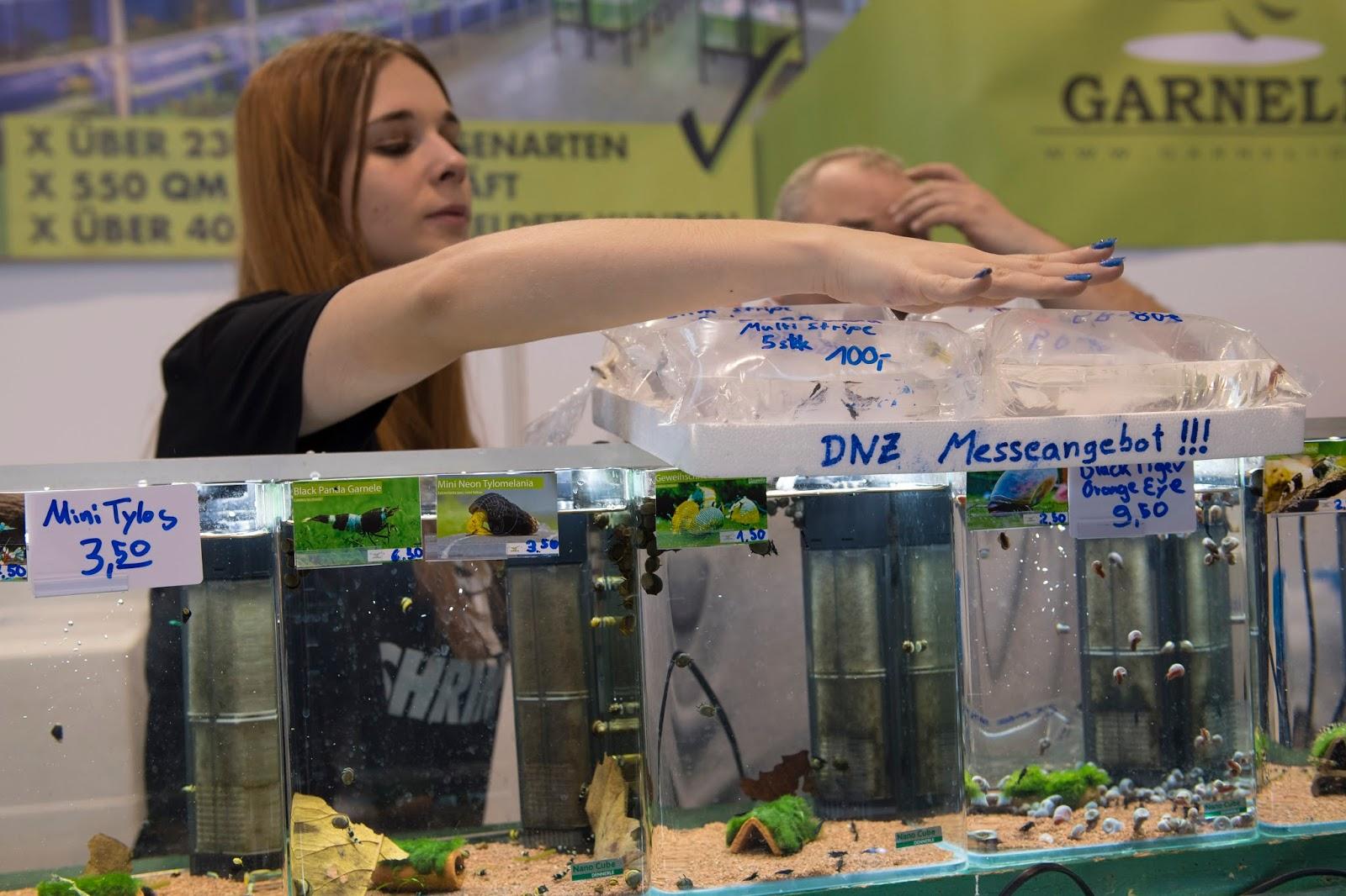 Nano Aquarium f u00fcr Anf u00e4nger