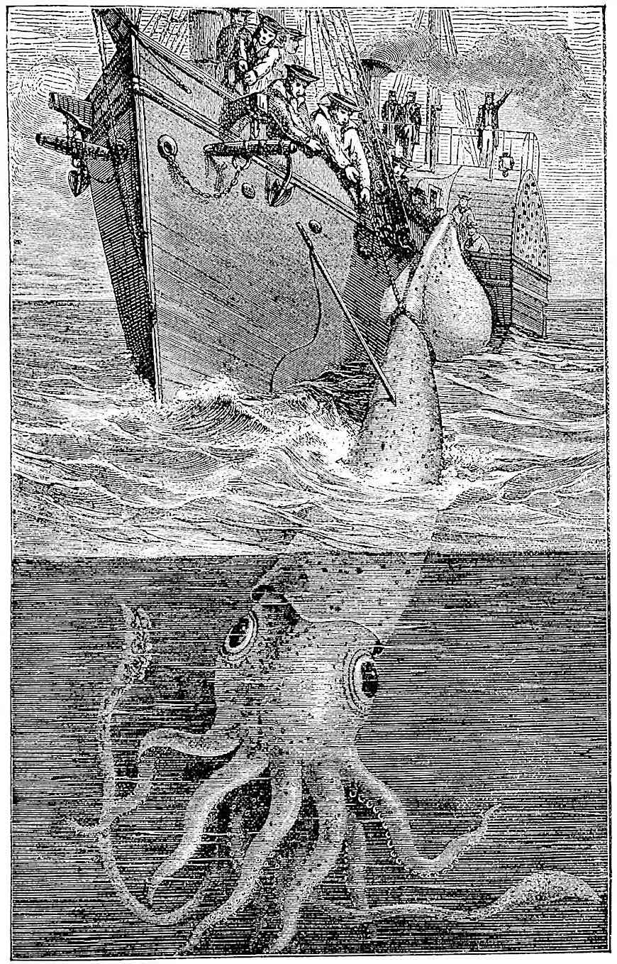 an 1883 giant squid illustrated