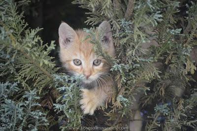 imágenes de gatitos bebes tiernos