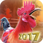 Download BALAP AYAM JAGO MOD APK - versi v1.6.0 Unlimited Money