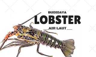 lobster air laut