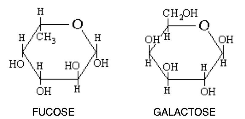 Galactose Structure Diagram see from these diagrams