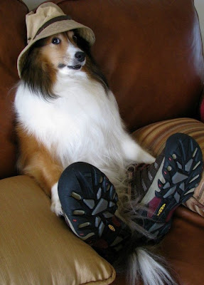 Foto divertida de perro con zapatos