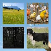 Imagens bucólicas de pássaros coloridas, de céu azul e de flores brancas