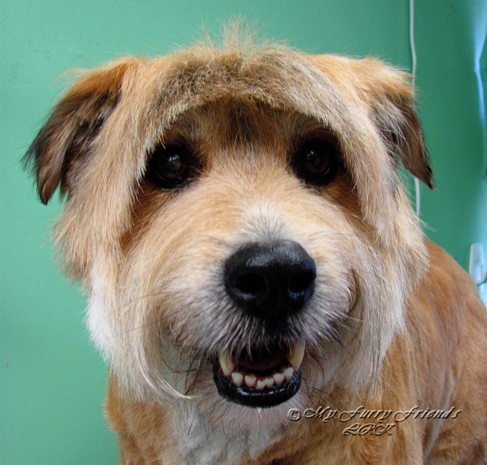 Pet Grooming: The Good, The Bad, & The Furry: Terrier Mix ...