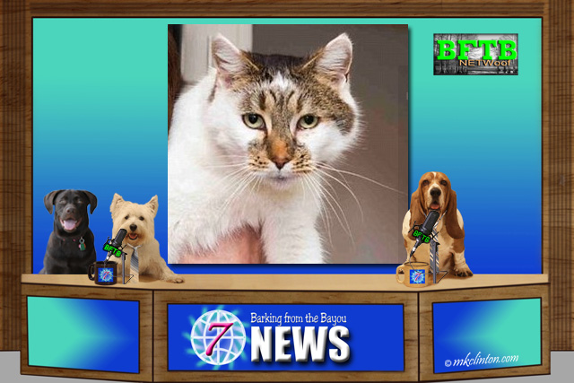 BFTB NETWoof News set with cat on back screen
