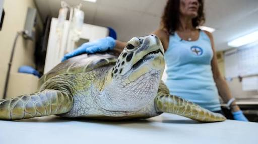 Woman In Pain As Doctors Find 'Dead Tortoise' In Her Privates