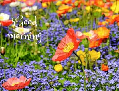 good morning flowers photos for you