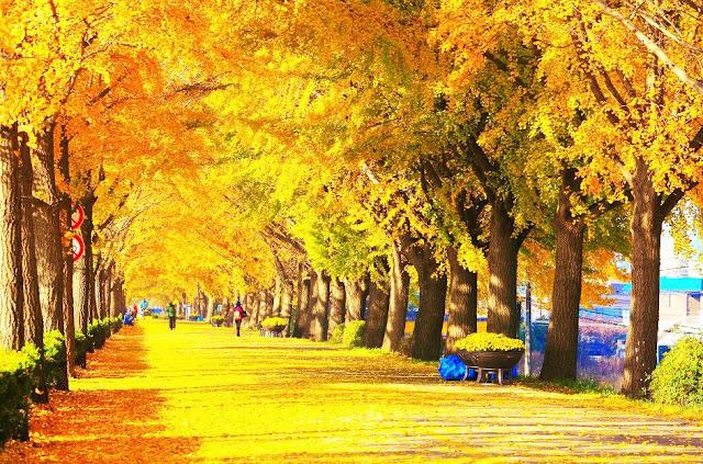 Kinh nghiệm xin visa du lịch Hàn Quốc tự túc siêu dễ dàng
