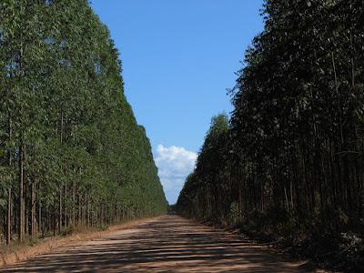 Estrada de Regência. Foto Gilson Soares, 2014.