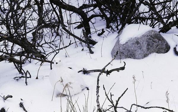 15 em pet ngụy trang còn giỏi hơn cả động vật hoang dã
