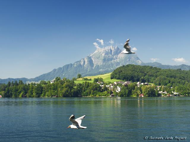 Trayecto a Alpnachstad - Lucerna, por El Guisante Verde Project