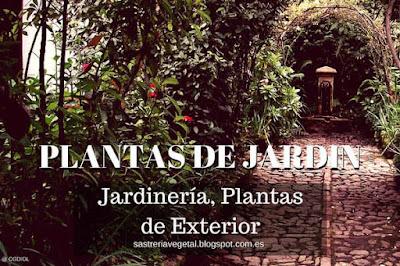 Las Plantas de Jardinería y mas de la exterior se debe evitar ciertos aspectos, aquí te lo explicamos.
