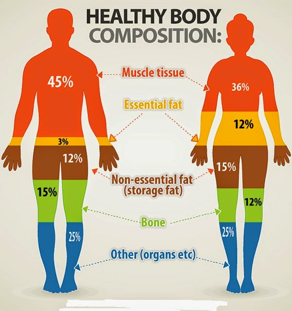 body fat percentage and waist size