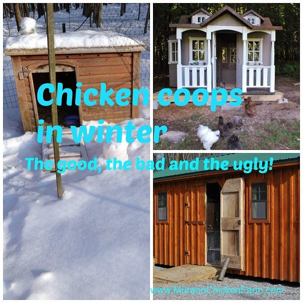 Winter chicken coops