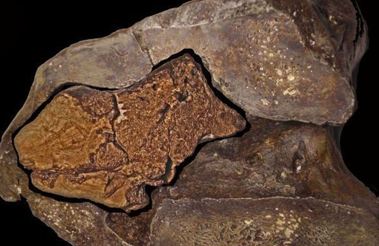 Fosil Otak Dinosaurus Ditemukan