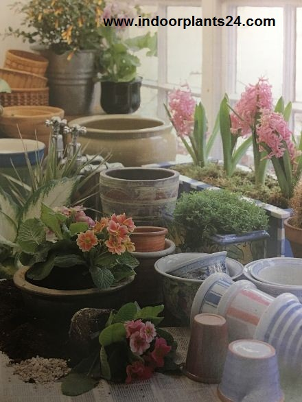 Ways of Including Indoor Plants Into Your Home