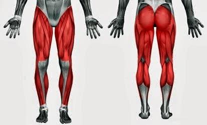 Musculos del tren inferior ejercicios