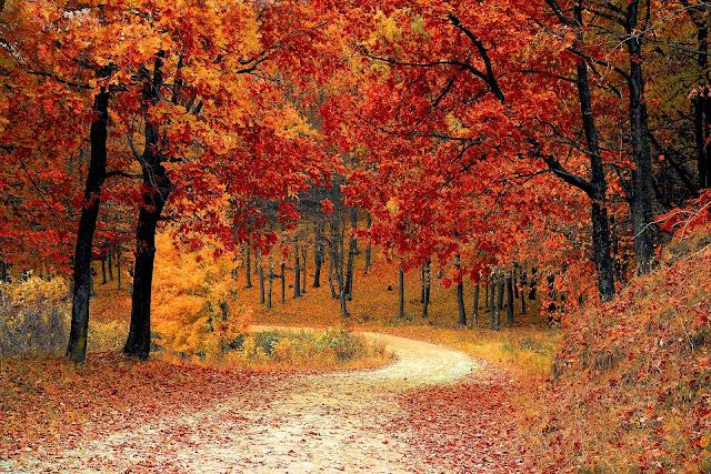 Coli Euganei in autunno