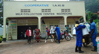 Rwanda: How a Gicumbi dairy cooperative became a 'billion franc' company