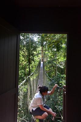 Memastikan keamanan Canopy walk Mulu National Park