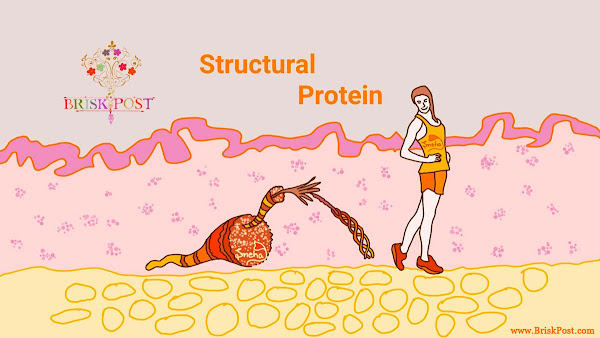 Structural Protein