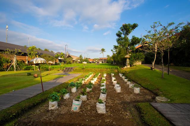 Alaya Ubud resort-Bali-Esterni-Risaie e orto