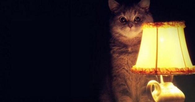 Как сделать домик для котов