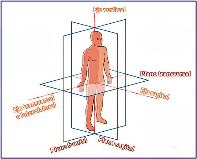 Ejemplo de imagen de plano anatómico con ejes y término cardinal