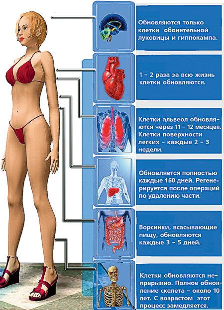 Цикл обновления спермы курение