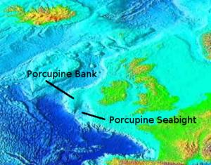 Lereng utara dan barat dari Porcupine Bank ini memiliki fitur spesies ...